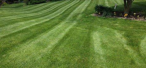 Delaware grass cutting, lawn mowing, lawn cutting