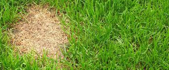 Repair Lawn Bare Spots