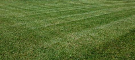 Delaware Lawn Mowing Service