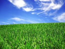 Nutrients for a healthy lawn